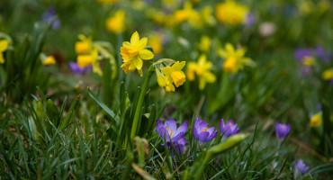 236817_Springbulbs_DeGuiseppi_Carol_LongwoodVolunteerPhotographer_